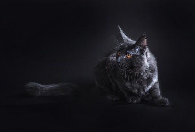 A vicces macskás videók sztárjai hétköznapi cicák, nem hétköznapi tettekkel!